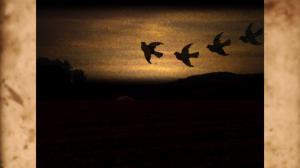 Birds_Road